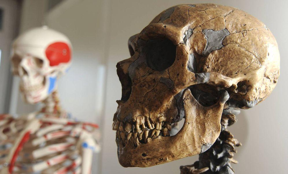 Foto: Cráneo de neandertal utilizado por el equipo internacional de investigadores, con participación española, que descifró el primer borrador del genoma del neandertal. Foto: EFE