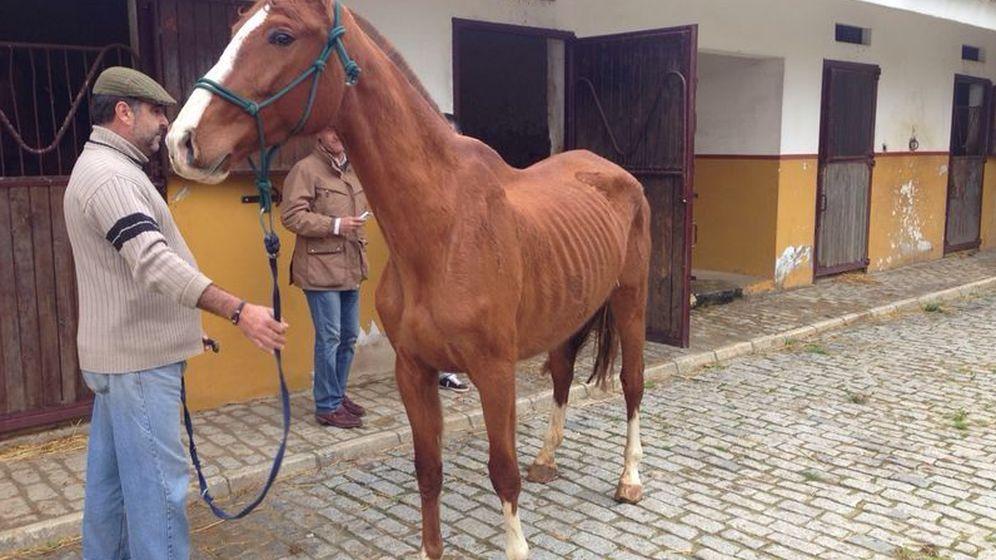 Foto: El estado de desnutrición de los caballos de Gil Salgado