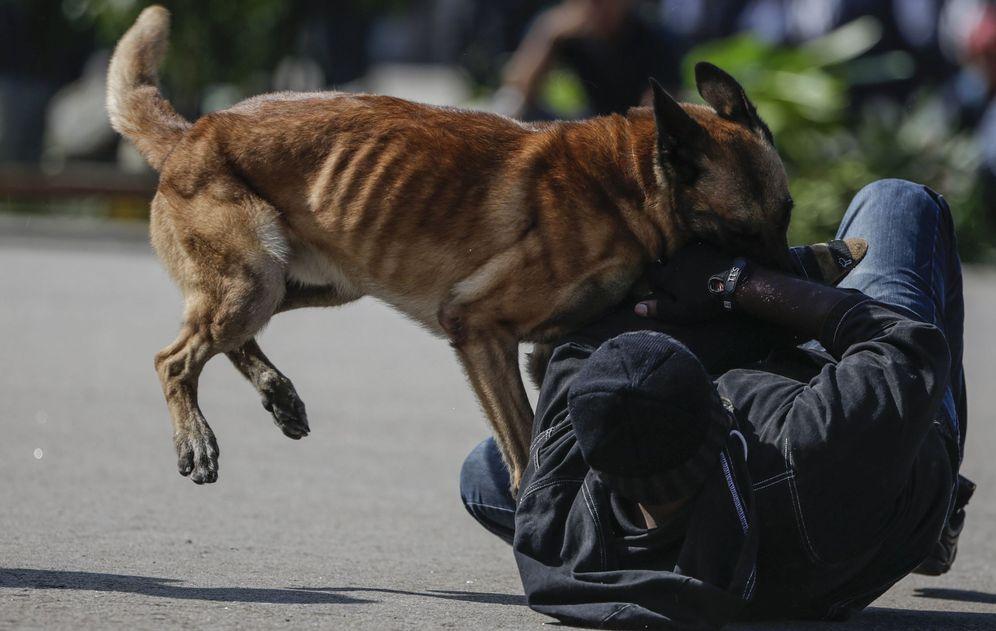 Foto: Un perro policía ataca a un hombre como parte de una demostración durante el día de celebración de la Policía, marzo de 2017 (EFE)