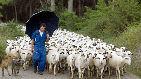 Las Cañadas Reales languidecen a medida que avanza el abandono rural
