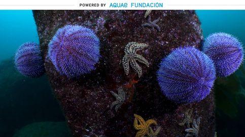 El animal marino que apareció hace 200 millones de años y del que se conservan sus caparazones