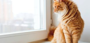 Post de La relación entre dos gatos que va a restaurar toda tu fe en el amor