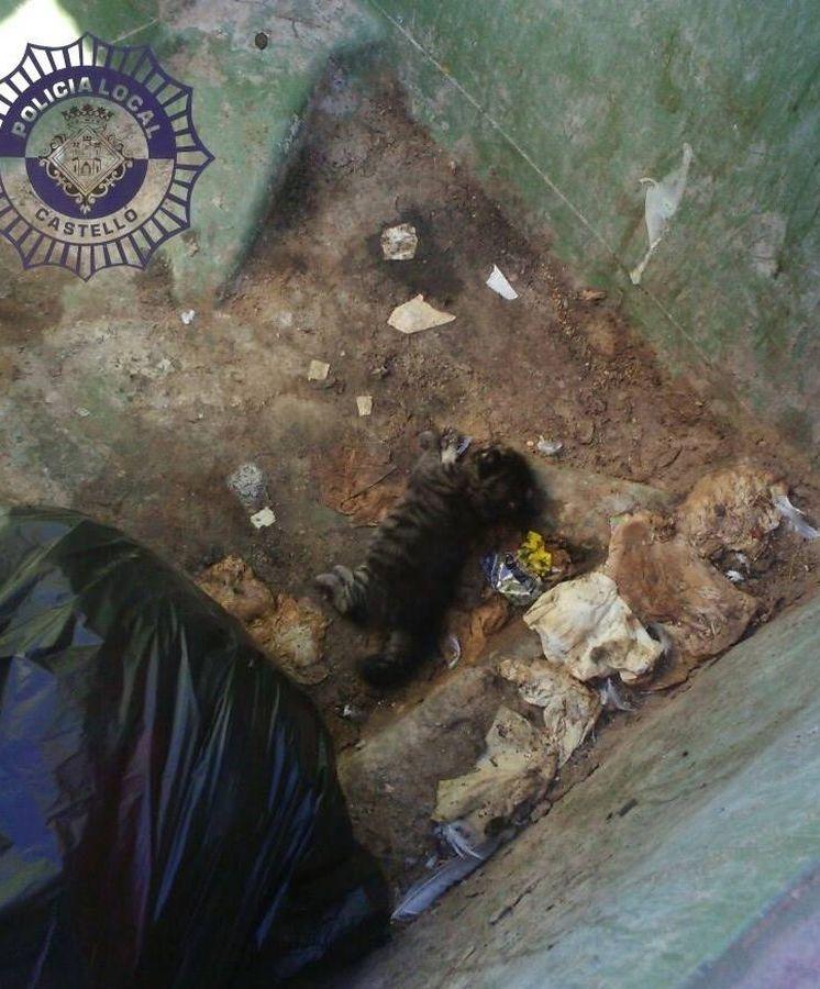 Foto: Imagen del cachorro de gato muerto (Policía Local de Castellón)