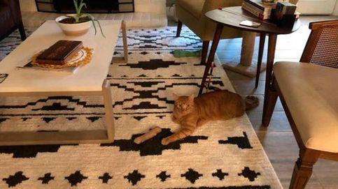 La 'ilusión óptica' del gato amputado que casi provoca un infarto a su dueña
