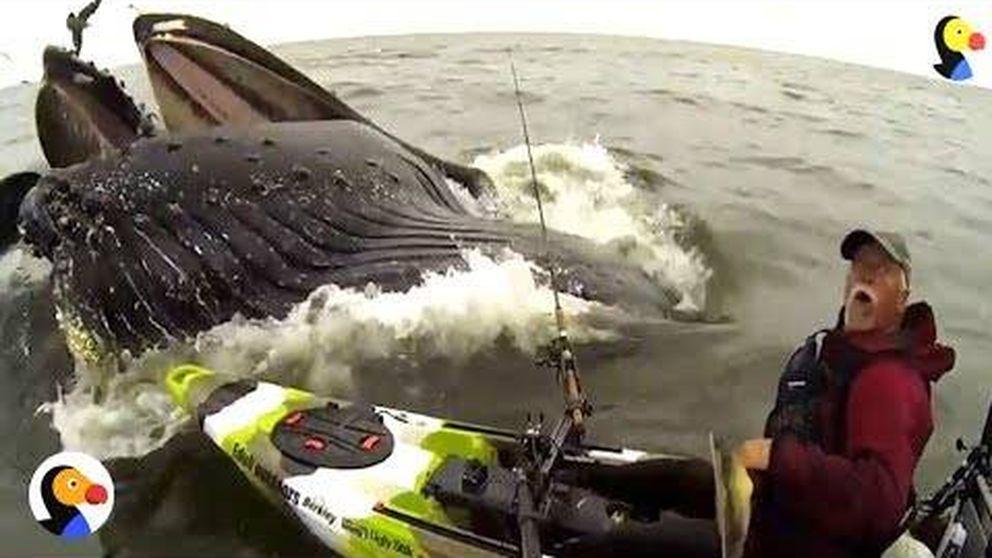 Unas ballenas sorprende a un hombre que iba en kayak