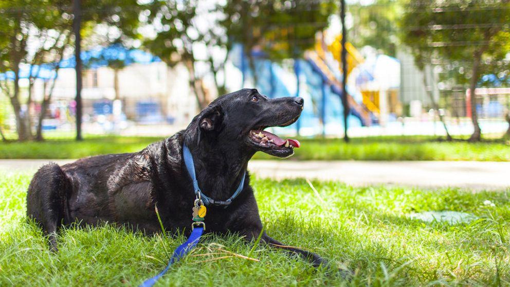 9 reglas que todos los dueños de perros deben seguir en los parques