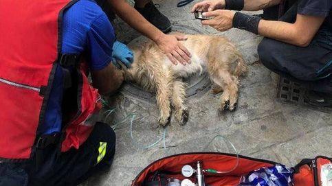 Los bomberos salvan y reaniman a un perro atrapado en el incendio en una vivienda