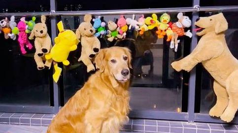 El vídeo viral de un perro que se despierta por la noche para cuidar de sus juguetes