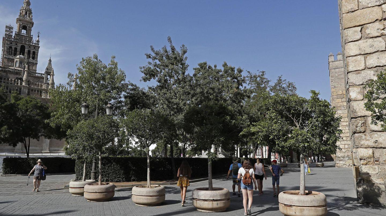 Sevilla ha reforzado la entrada al Alcázar en el casco antiguo con la instalación de unos maceteros. (EFE)