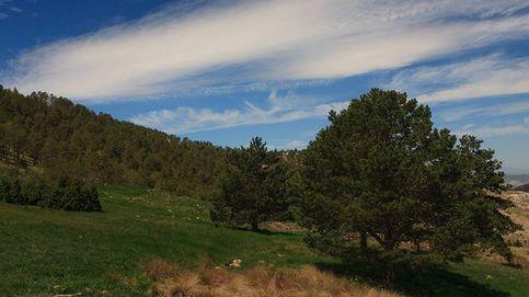 Y Teruel volvió a existir: este es el proyecto que rescató sus bosques tras un incendio