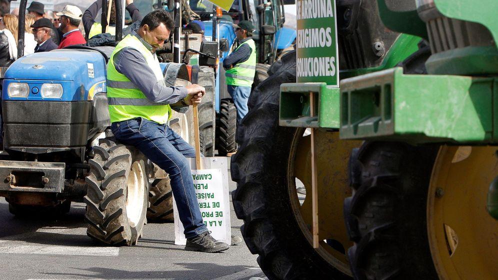 Foto: Agricultores de Alicante, este martes, en protesta por los bajos precios del producto. (EFE)