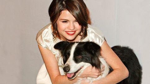 Celebs y cachorritos: las famosas que han adoptado perros durante el aislamiento