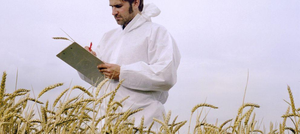 Foto: El trigo transgénico ha sido objeto de debate en la comunidad científica. (Corbis)