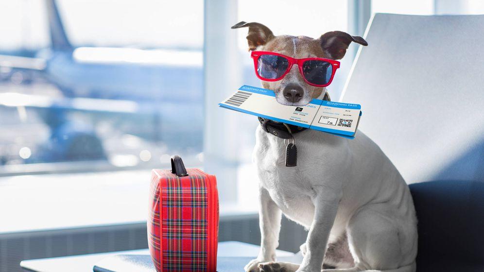 Foto: En una ocasión un perro se hizo caca en el pasillo del avión. (iStock)
