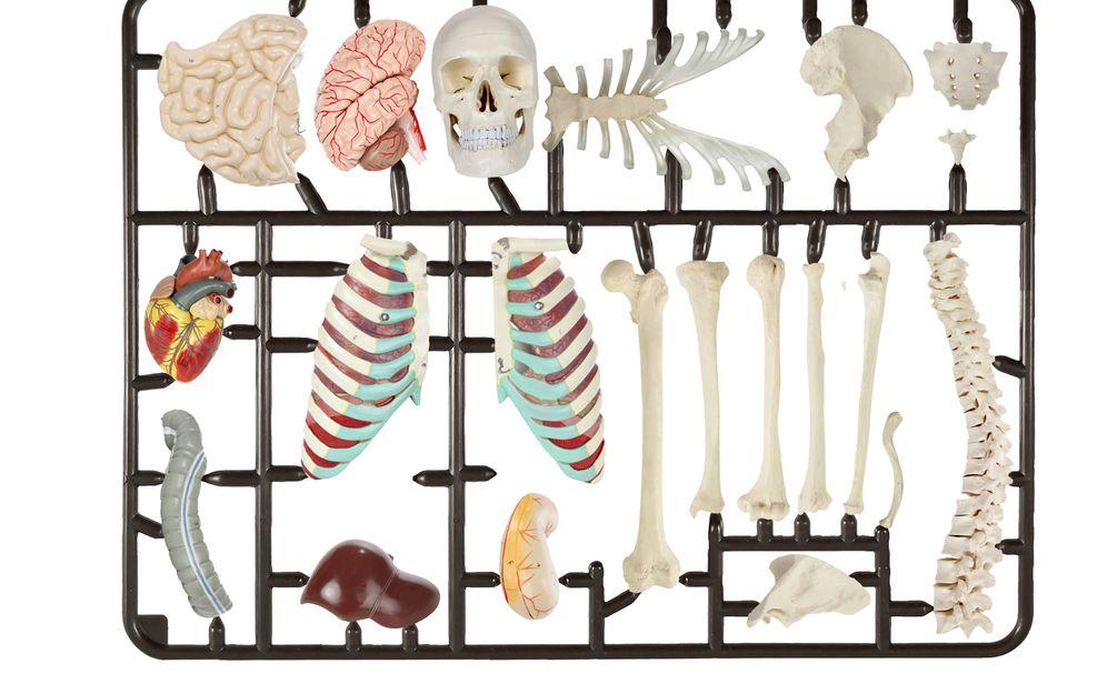 Foto: El mercado de los implantes sanitarios, visto por Raúl Arias.