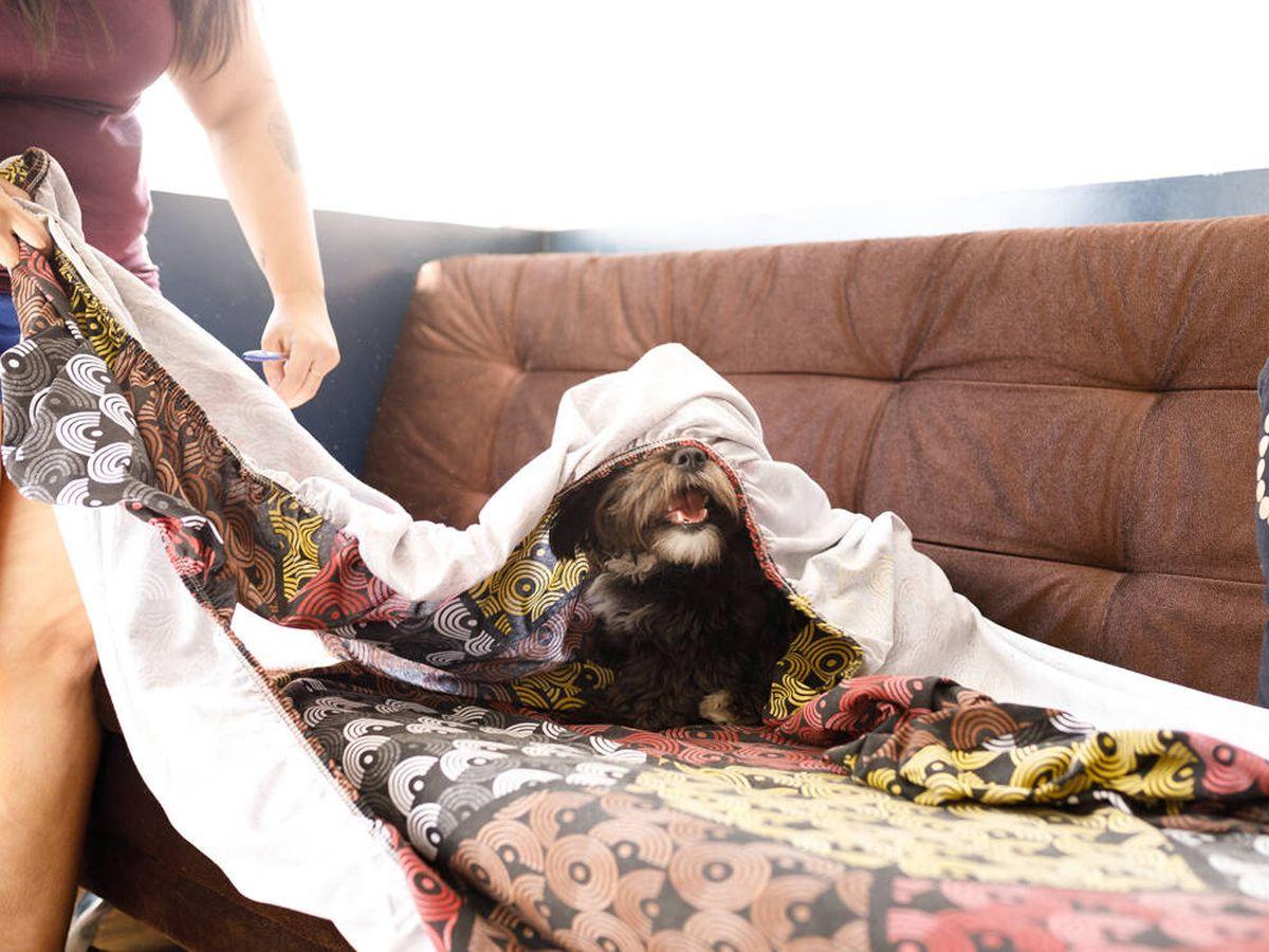 Foto: Las mejores fundas elásticas para proteger tu sofá (iStock)