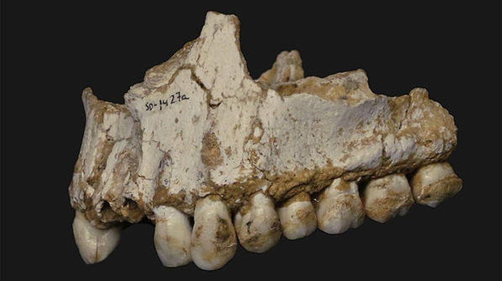 Foto: Mandíbula neandertal encontrada en el Sidrón / Andrés Díaz (CSIC)
