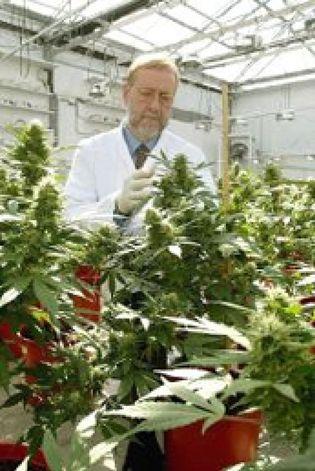 Foto: Un Estado de EEUU aprueba el uso medicinal de la marihuana