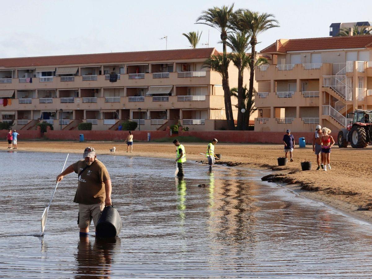 Foto: Limpieza de las playas del mar menor (EFE)
