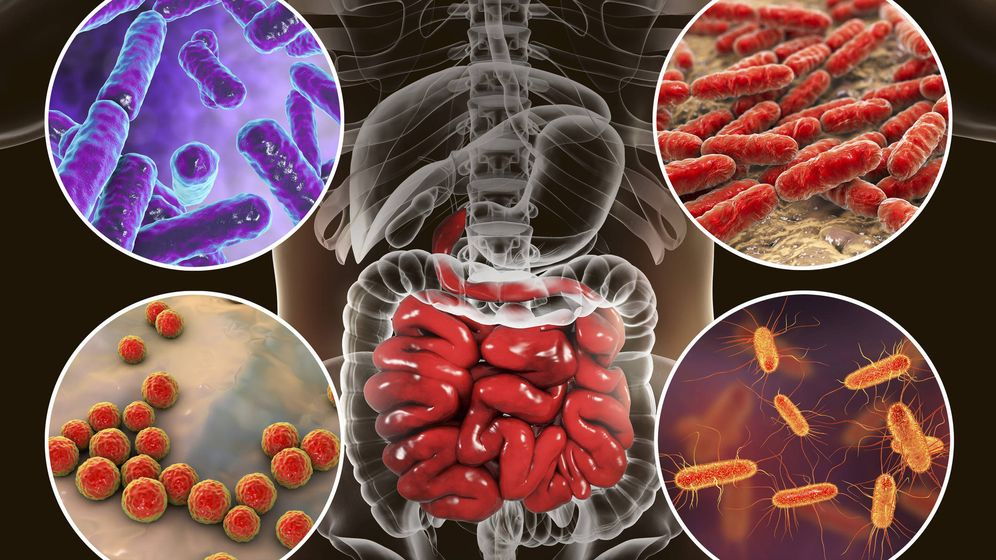 Foto: Bacterias en el intestino. (iStock)