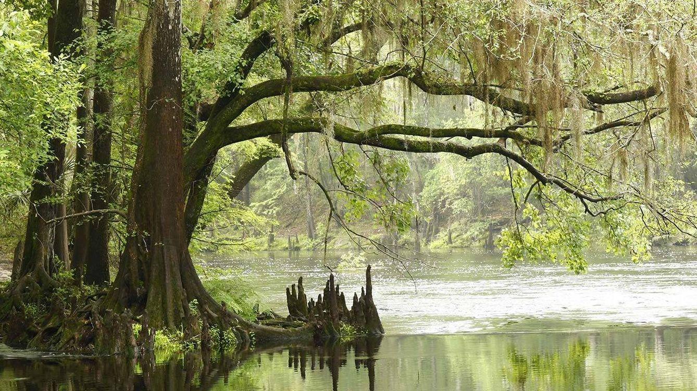 parque nacional everglades fica - photo #13