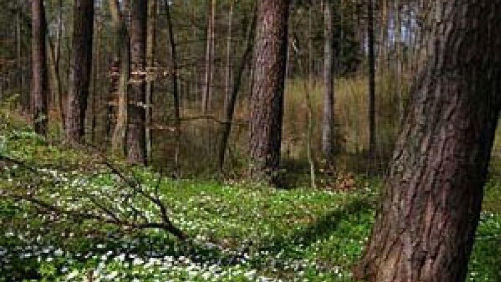 La inversión verde, responsable y sostenible de Bosques Naturales se viene abajo