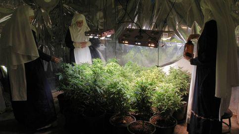 Las hermanas de la marihuana: las falsas monjas que cultivan cannabis