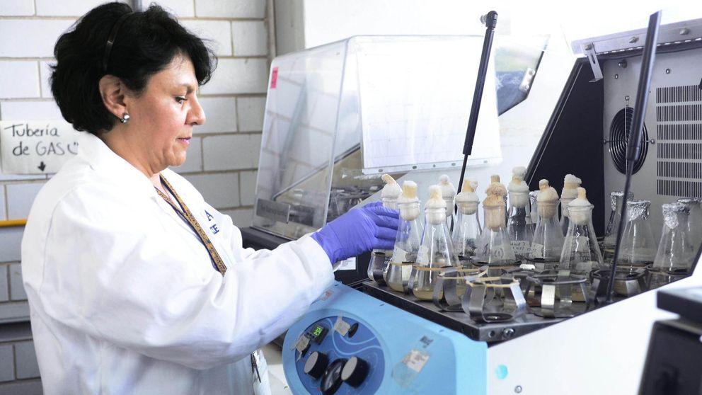 Los Veterinarios de Sevilla creen que la listeriosis se debió a la falta de higiene