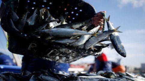 Portugal y las sardinas, una historia de amor