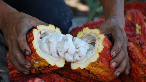 El cacao destierra al narcotráfico de un valle cocalero de Perú