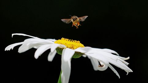 Abejas polinizan flores en Bucarest y verano en Suiza: el día en fotos