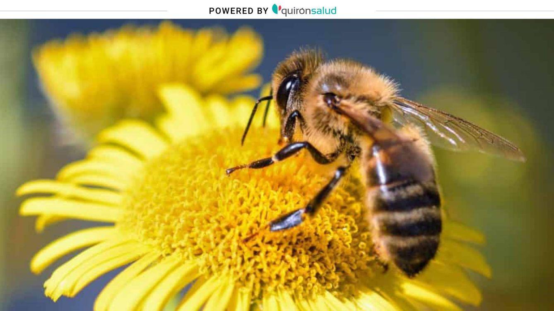 Barro para las abejas y otras falsas creencias para curar las picaduras