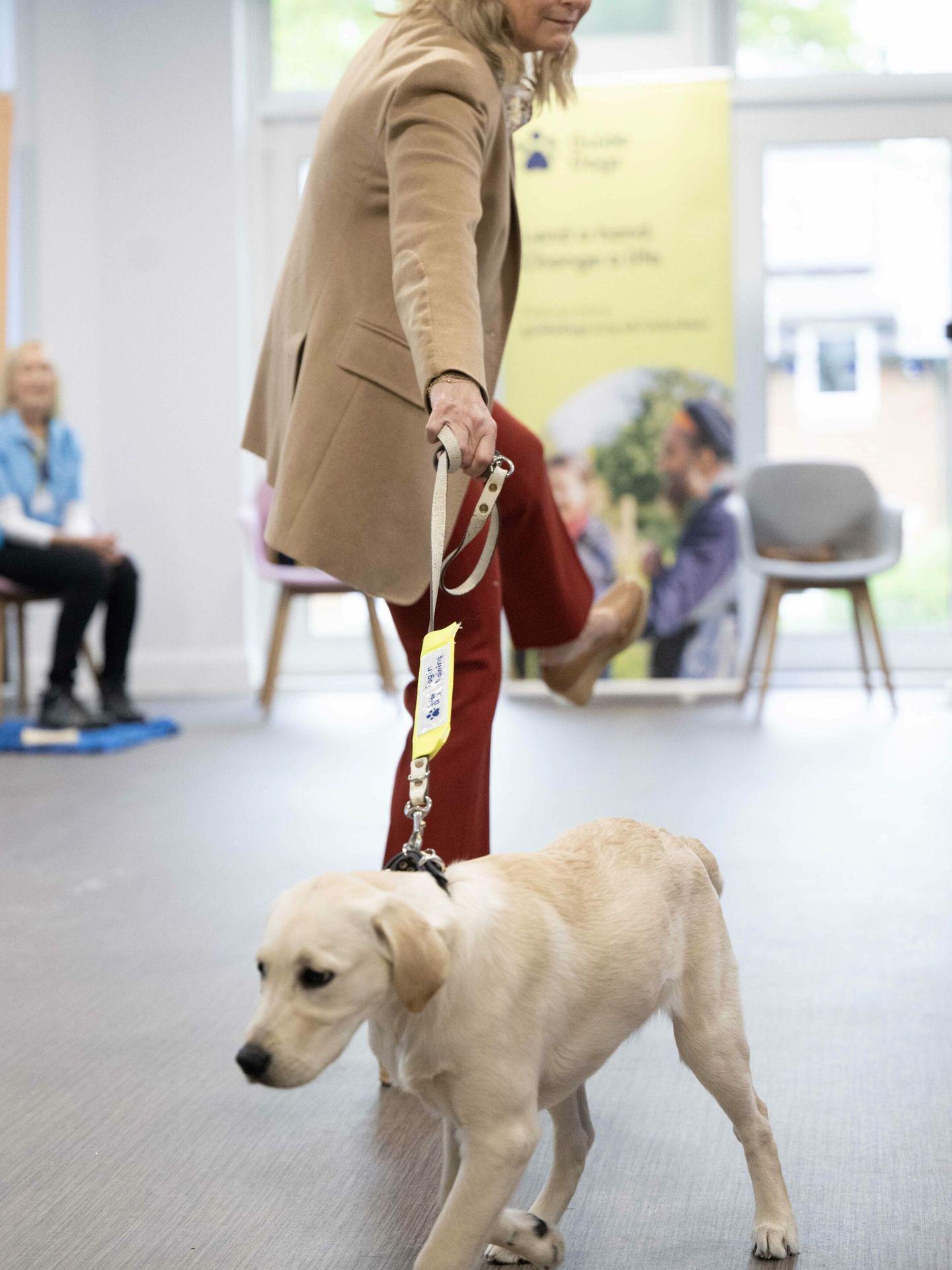 Amadeo de Bélgica y su esposa, Elisabetta Rosboch. (CP)