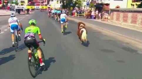Un poni se cuela en la Vuelta ciclista a Polonia