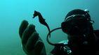 La ciudad artificial de los caballitos de mar está en un golfo de Grecia