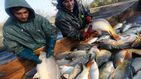 Europa vota para legalizar la pesca eléctrica: así se la colaron los pescadores a los políticos