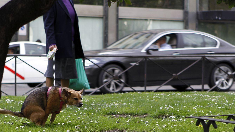 Los veterinarios, contra el censo genético de perros de Madrid: No tiene ni pies ni cabeza