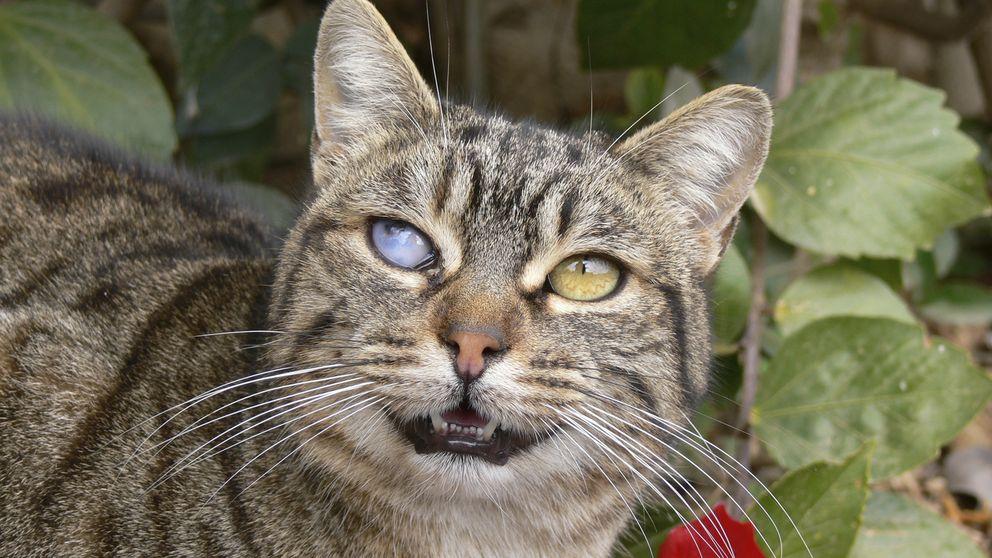 La verdad sobre el parásito que te pueden contagiar los gatos