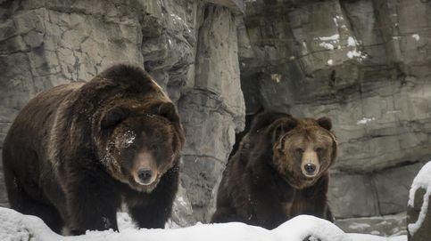 El despertar de los osos