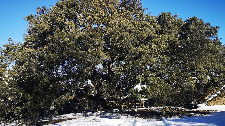 Rusia usa 'hackers' para ganar a un pueblo de Huesca el concurso al árbol europeo del año