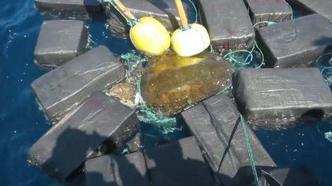 El angustioso rescate de una tortuga enredada entre siete toneladas de fardos de cocaína