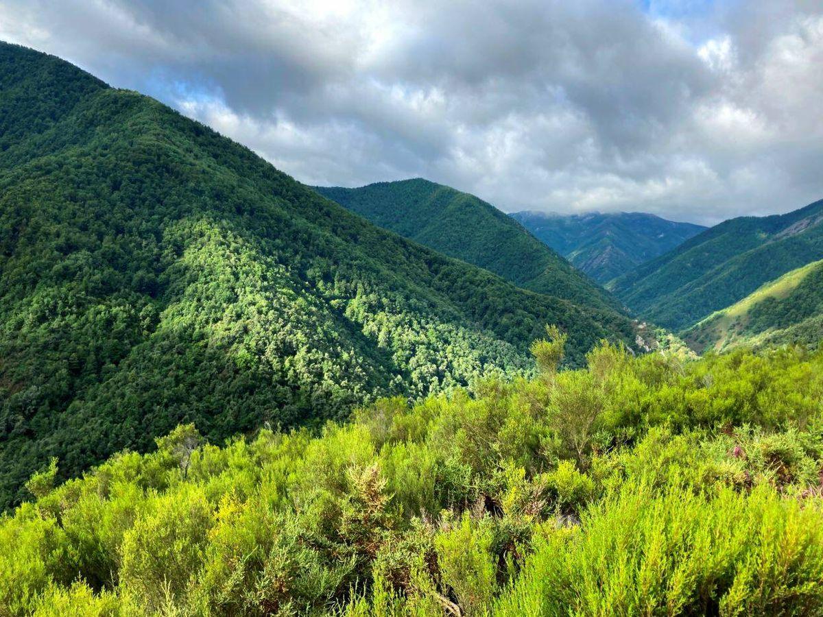 Foto: Reserva Natural de Muniellos, en Asturias (Foto: Jose Luis Gallego)