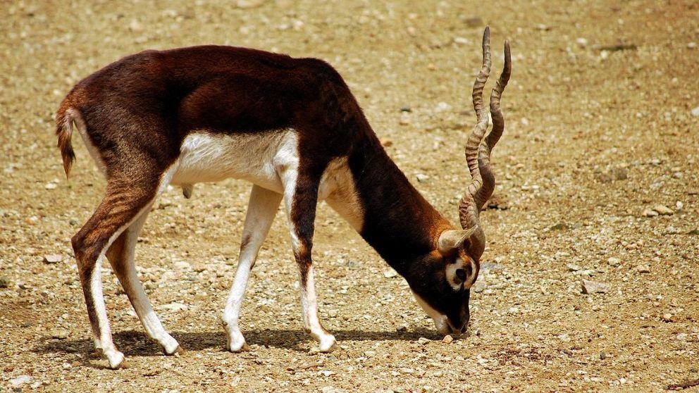 Denuncian al Zoo de Barcelona por matar animales sanos recién nacidos