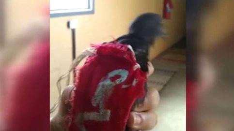 Una paloma mensajera, el último método utilizado en una cárcel de Brasil para introducir droga