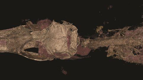 El dinosaurio más pequeño es en realidad un lagarto