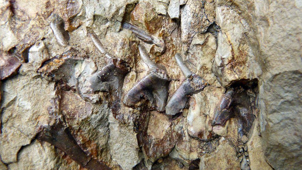 Sólo 90 euros de multa por robar un fósil de 65 millones de años