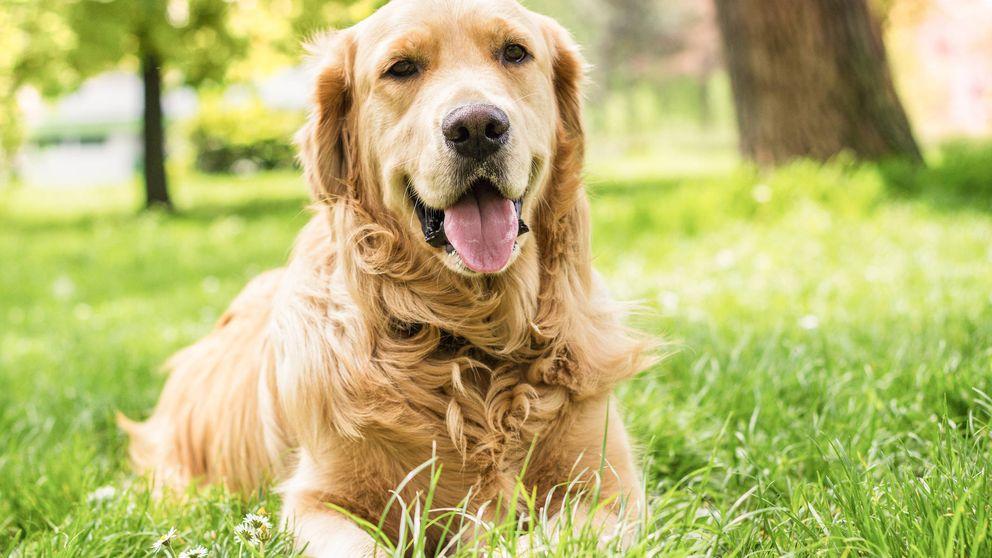El perro que ayudó a una mujer enferma a volver a mover el brazo