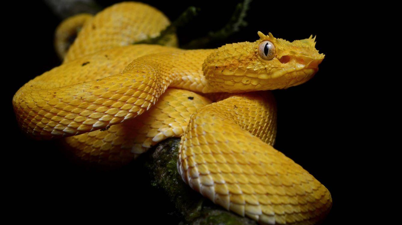 La De c Las Serpientesc Isla Ygb6yvf7