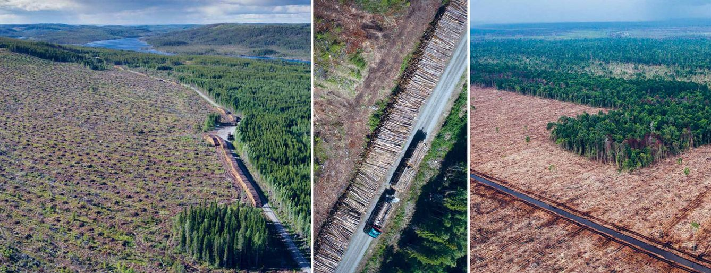 Foto: (Fotos: Greenpeace)
