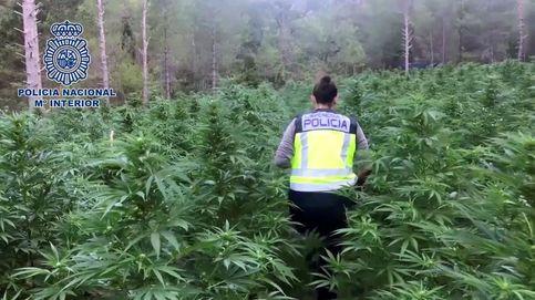 Marihuana bajo tierra: construyen un zulo en Granada para ocultar una plantación